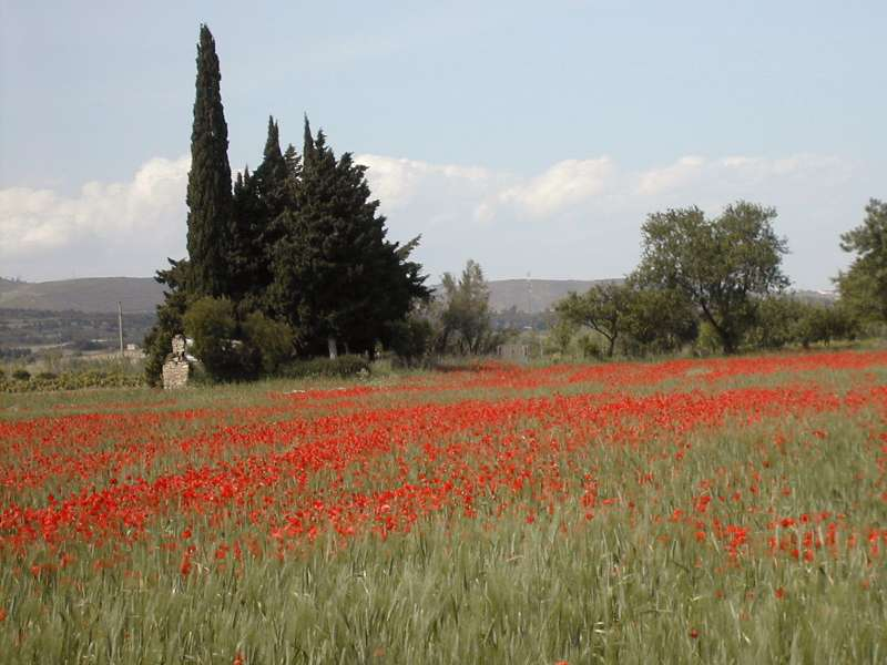 Gite near the poppy fields